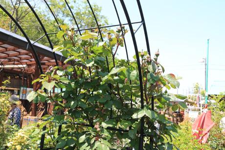 garden100502-11.jpg