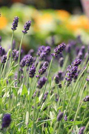 garden100502-9.jpg