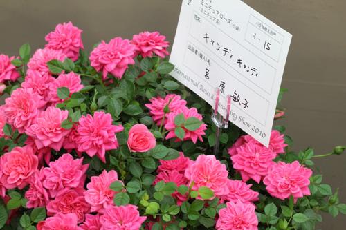 kokubara-rose-21.jpg