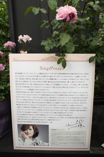 kokubara-rose-4.jpg