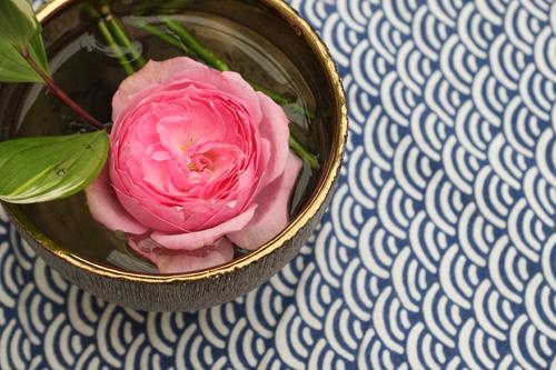 kokubara-rose-5.jpg