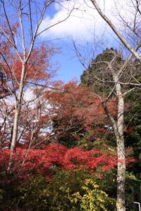 kyoto--1.jpg