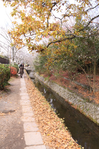kyoto--2.jpg