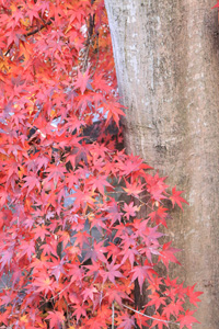 kyoto-10-s.jpg