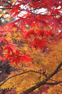 kyoto-11-s.jpg
