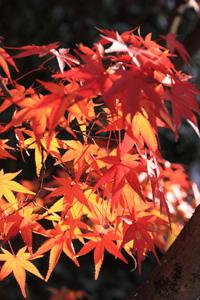 kyoto-12-s.jpg