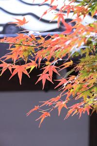 kyoto-13-s.jpg
