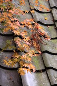 kyoto-16-s.jpg