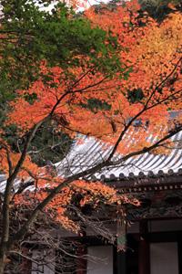 kyoto-17-s.jpg