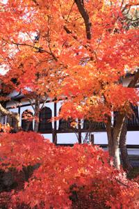 kyoto-2-s.jpg