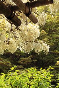 kyoto-201105-10tate.jpg