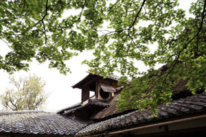 kyoto-201105-5yoko.jpg