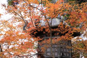 kyoto-21-s.jpg