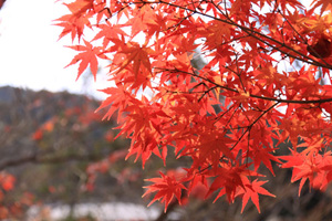 kyoto-24-s.jpg