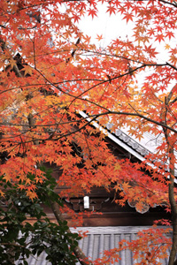 kyoto-4-s.jpg