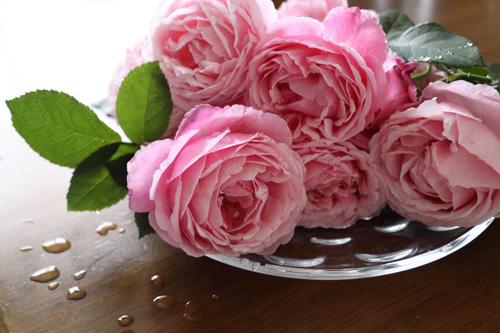rose-100704-10.jpg