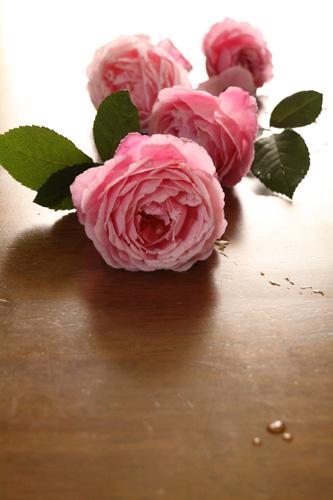 rose-100704-9.jpg