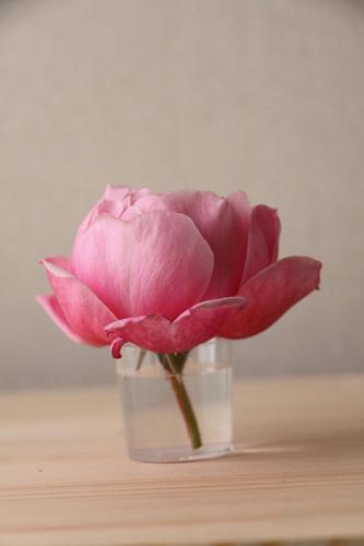 rose-101107-1.jpg