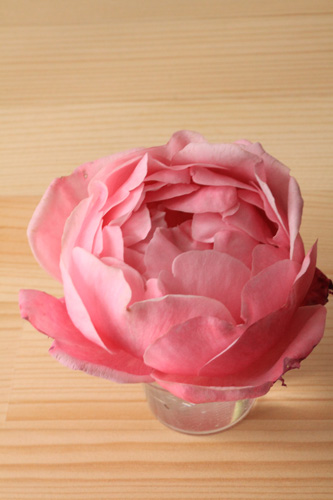 rose-101111-1.jpg