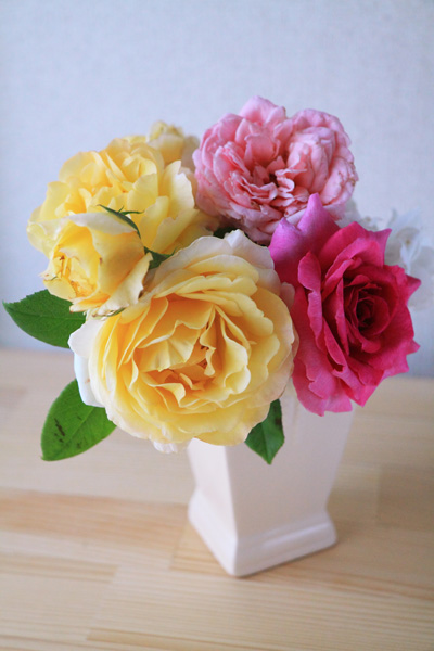 rose-110709.jpg