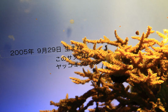 toba-110814-7.jpg