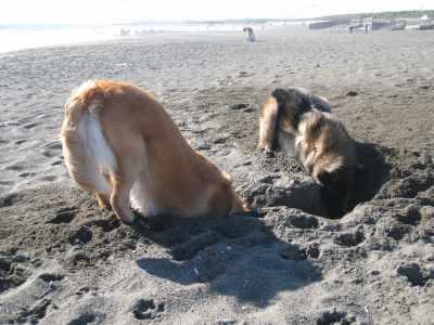掘って!掘って!