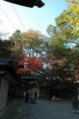 DSC_8956-s.jpg