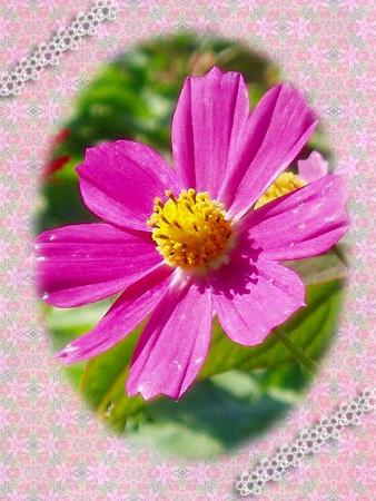 hami-pink