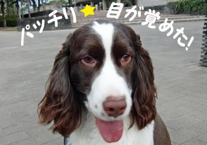 CIMG0741-20110407-0625-1.jpg