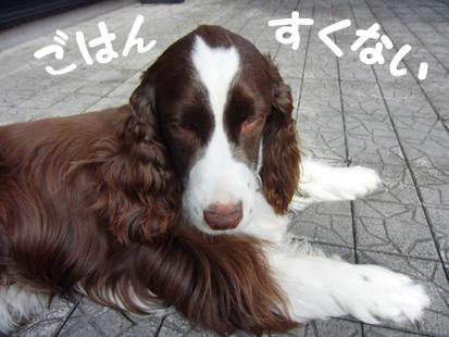 CIMG1472-20110807-1633-1.jpg