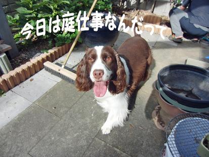CIMG1540-20110911-0902-1.jpg