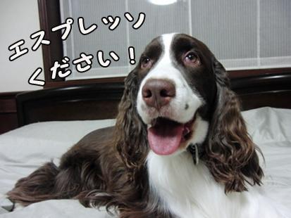 CIMG1630-20111006-2057-1.jpg