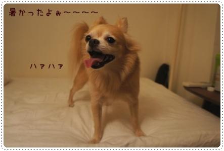 2011071704.jpg