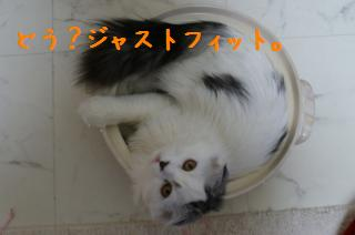 pict-DSC00345.jpg
