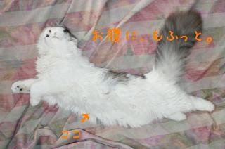 pict-DSC00430.jpg