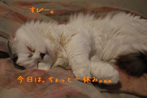 pict-DSC00745.jpg