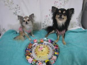 0831 000000 ケーキとマロくる