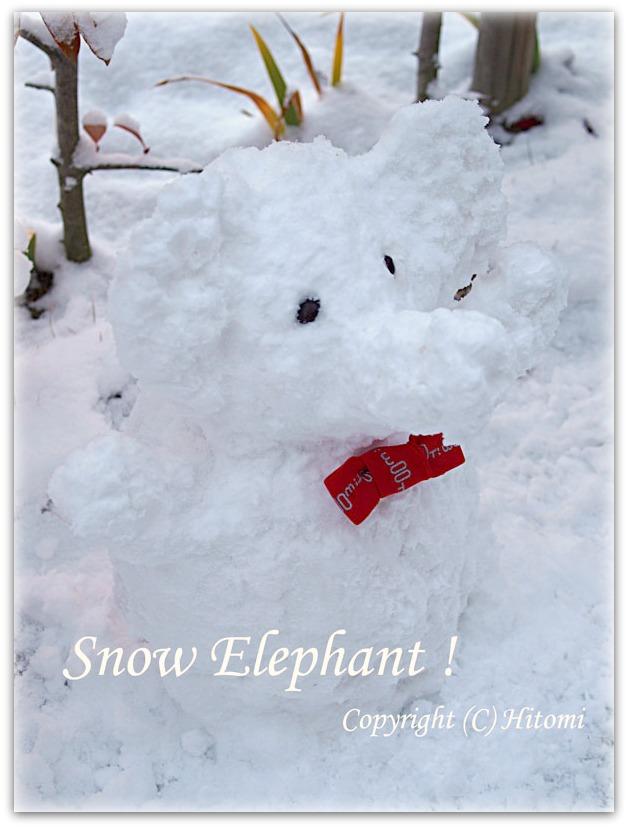 雪ぞうさん♪