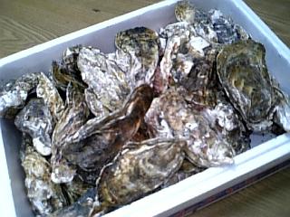 牡蠣たくさん
