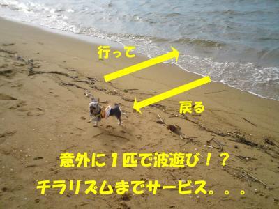 1匹波遊び