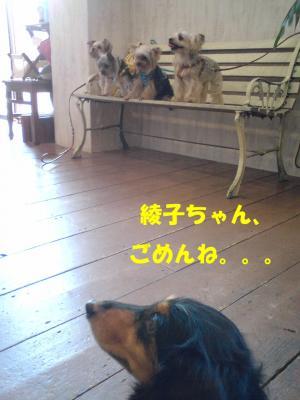 綾子ちゃんとヨーキーズ