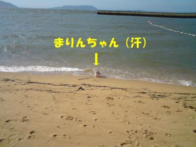 海へ入ろうとするまりんちゃん