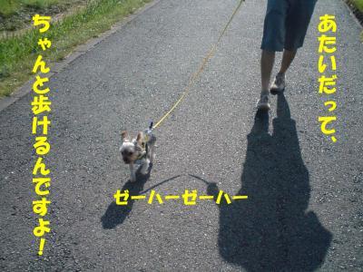 おしゃまに歩いてます