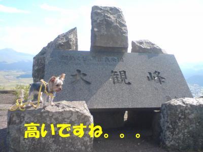 犬生初の大観峰