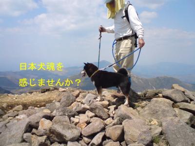 星生山に犬!?