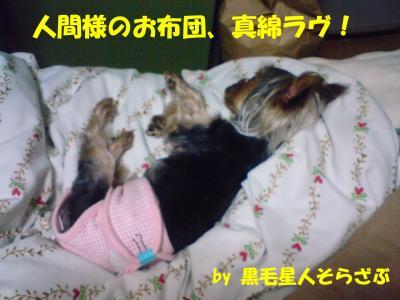 お布団大好き犬。