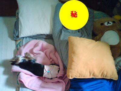 一人と一匹のある日のお昼寝