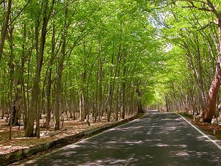 森のトンネル2
