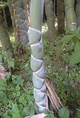 fujichikurui_200906_03.jpg