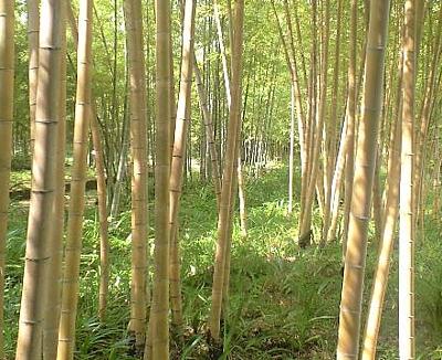 fujichikurui_200906_05.jpg